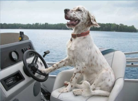 dog-driving-boat-o.jpg